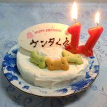 ☆手作りワンズケーキ…