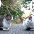 新110話 【 これ…