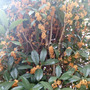 庭に咲く花・秋