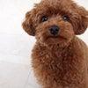 ペットの防災対策について考えてみる!の画像