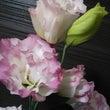 今月のお花も美しい