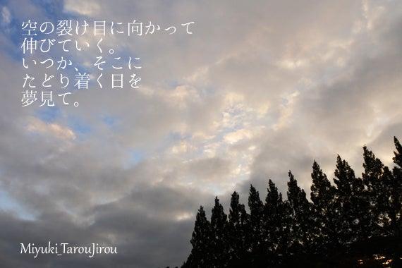 青空 雲 木々