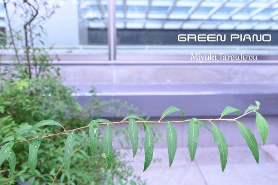 スカイガーデン 花 植物