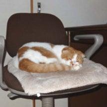 長雨で寝てばかりの猫