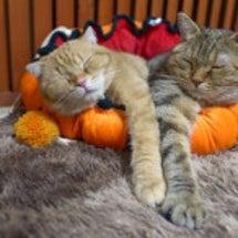 かぼちゃベッド
