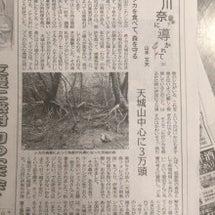 伊豆新聞の記事と企画…