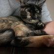 猫屋敷の弔事と慰め