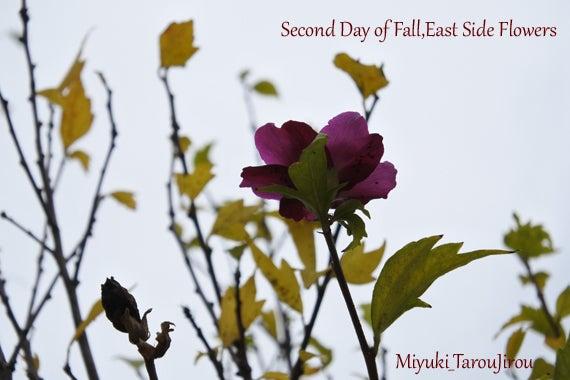 秋 花の写真