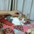 猫の手事例40 【活…