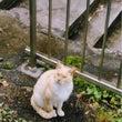迷い猫を保護しており…