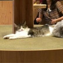 猫カフェに行ってきま…