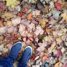落ち葉とサンタクロー…