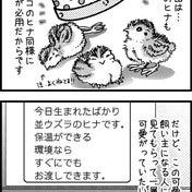 「うずらの欲しい人、読んで~ッ!!!」という叫び