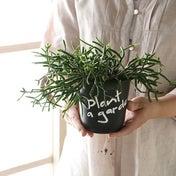 ★塗って書くだけ!植木鉢のお洒落リメイク方法