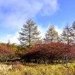 美ヶ原高原 秋の彩