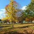 秋らしく…