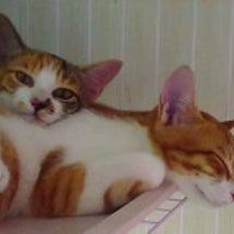 【保護っ子情報】仔猫…