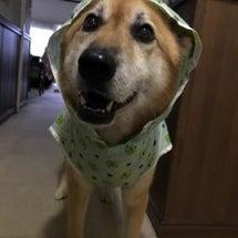❤︎犬の表情❤︎
