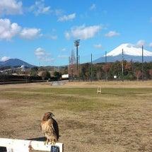 富士山がすぐそこに。…