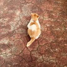 寡黙な猫は