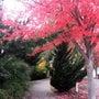 シアトルの秋
