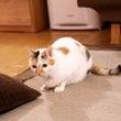布団好きな猫