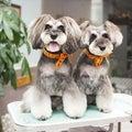 #髭犬祭の画像