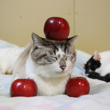 くろの紅玉りんごのせ