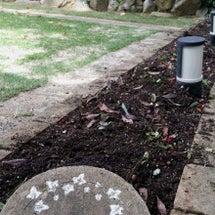 ガーデンの植え替え