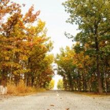 十勝の秋の景色