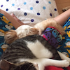 おっとりとした穏やかな保護猫おー君の画像
