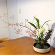 生け花  花と暮らす