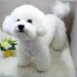EXO セフン 愛犬…