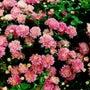 今日の誕生花はスプレ…