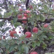 青森のりんご園