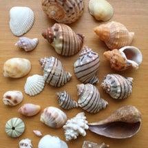 遠州灘の貝殻