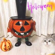 かぼちゃ2/山木梨沙