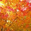 ビタミンカラーの秋☆