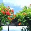私の軽井沢移住の妄想シーン♡書くだけで叶わない夢を昇格させる6つの質問♡の画像