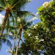 Hawaii旅行の記…