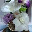 胡蝶蘭の供花♬