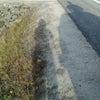 旅行で野生のムースに、遭遇の画像