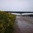 雨の淀川ラン