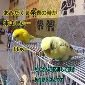 あみだくじ結果〜(=゚ω゚)ノ