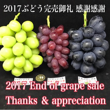 2017 ぶどう完売…