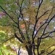 幸せな秋の1日