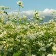 八ヶ岳の秋の花々 そ…