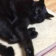 サマーカット猫