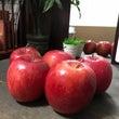 りんごりんご♡