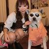 秋田犬はやちゃん&子猫バサラの楽しかった雨の日。。。の画像